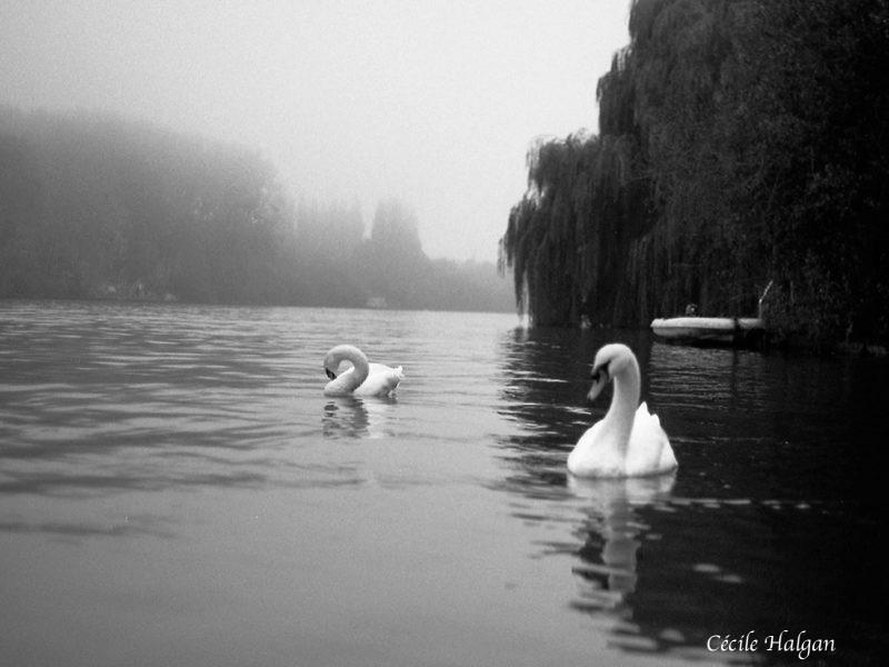 Nuances de gris et d'argent - Cécile Halgan